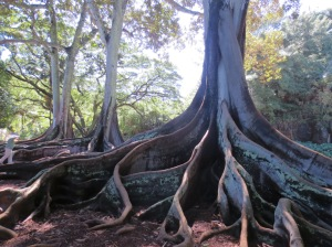 'Jurassic Trees' at the NTBG Kaua'i