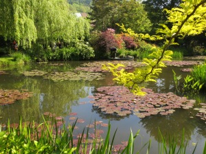 The famous water lilies at Monet's garden!