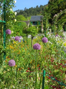 Lovely alliums