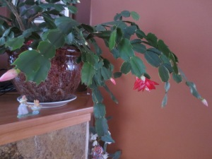 My Easter cactus!