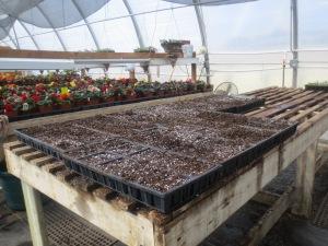 Transplanting table